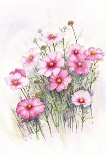 Wenskaart Roze bloemen met envelop