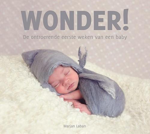 Wonder! (Paperback)