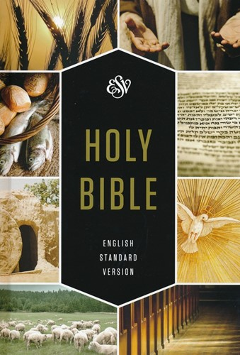 ESV text book edition hardcover (Hardcover)