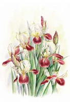 Wenskaart Iris met envelop